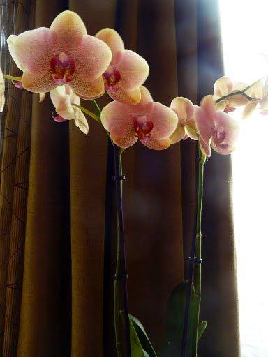 011-Floresenlasmesasdelbuffet.jpg